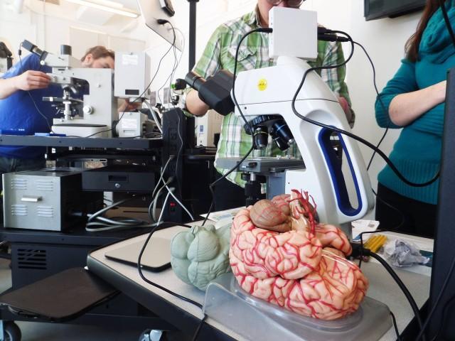 brainmicroscopes